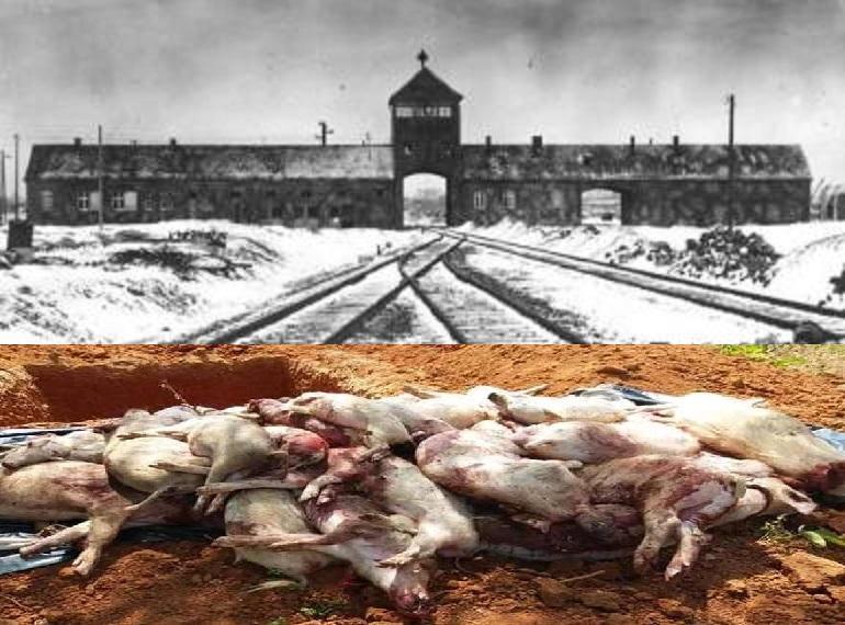 Porcii lui Daea și Jidanii de la Auschwitz 200807131383757010bramabirkenau