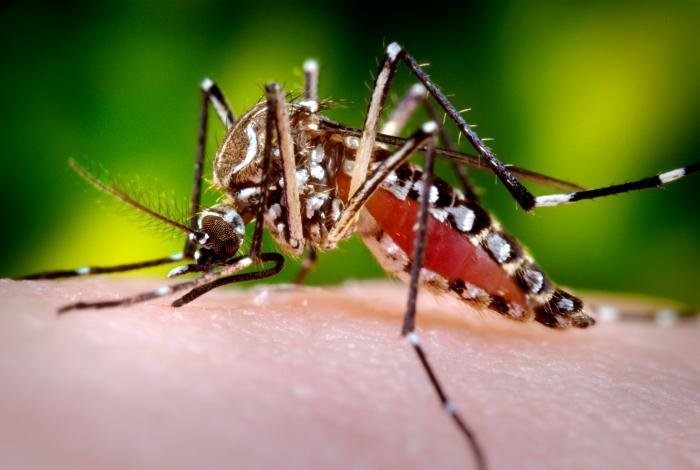 Utilizarea Insectelor ca Armă Biologică