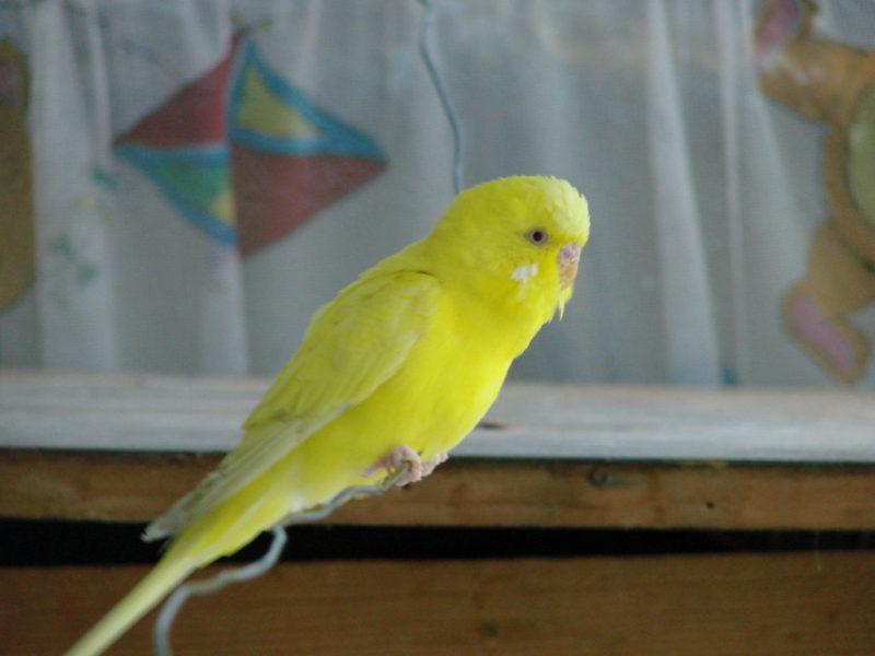 Libertatea nu este pentru papagali