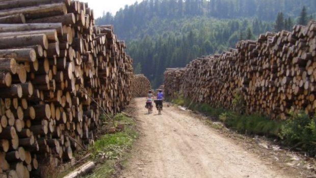 Defrișarea Pădurilor de către Austrieci