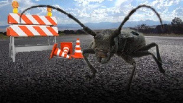 Gândacul Croitor