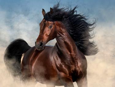Calul - Ajutorul Soldatului